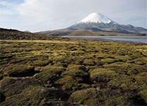 Parinacota (6348m), Chile