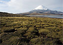 Parinacota (6348m), Lauca, Chile